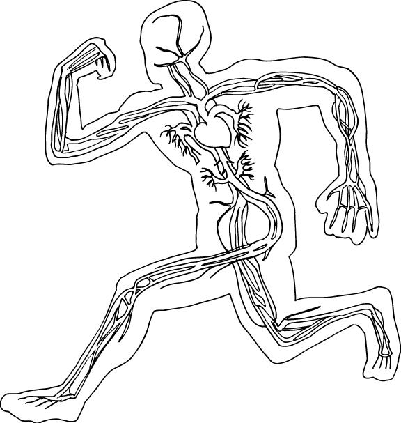 Circulatory_OL