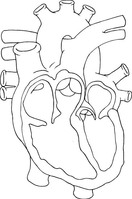 Heart_OL