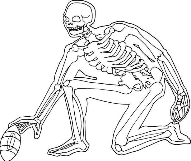 Skeleton_OL