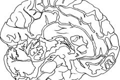 Brain_OL